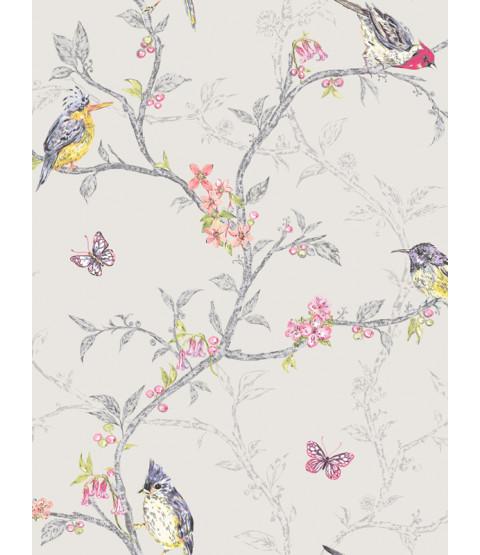 Fondo de Pantalla de Aves Phoebe - Gris Paloma - 98081