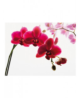Orchid Wall Mural 2.32m x 3.15m