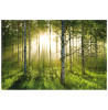 Forest Wallpaper Wall Mural 232 x 315 cm