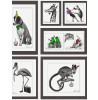 Mad Dogs Framed Animals Wallpaper - 97921