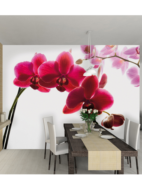 Orchid Wall Mural 232m x 315m
