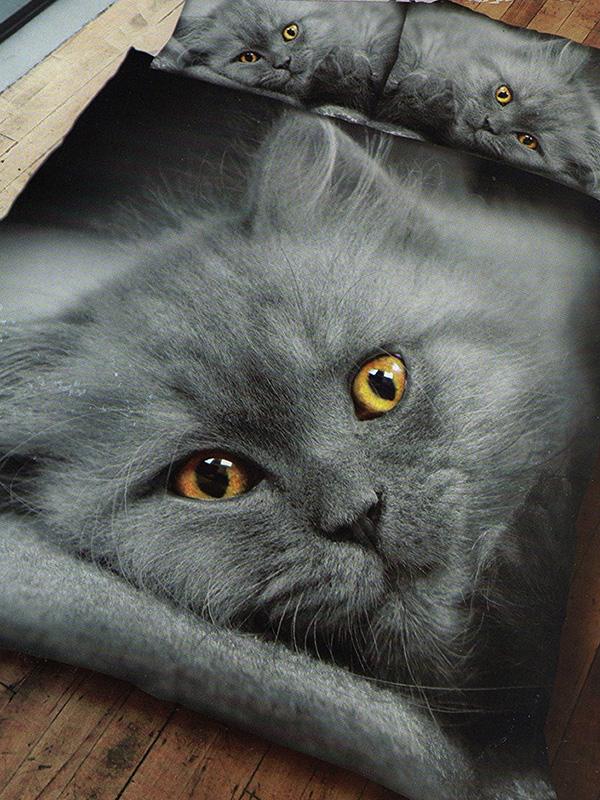 Grey Kitten Single Duvet Cover and Pillowcase Set